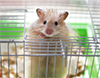 mouse-cage-puff