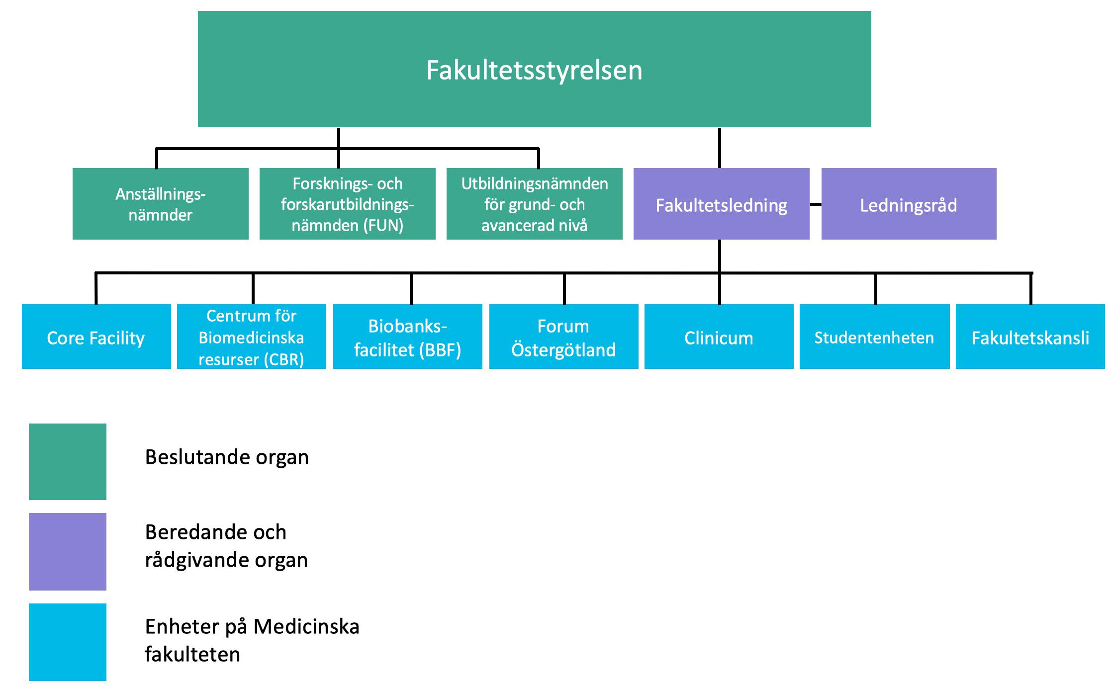 Medicinska fakultetens organisationsstruktur